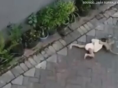 Caught on digicam: Bike-riding monkey grabs toddler in Indonesia