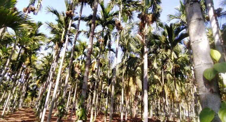 44_ Farm land for Sale close to Bangalore (90KM) three Acre,  Tumakuru ☎️6360727149