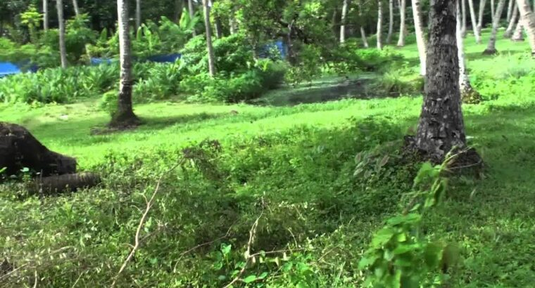 Property on the market at Chandiroor, Cochin, India – 35 acres – for Massive Tasks