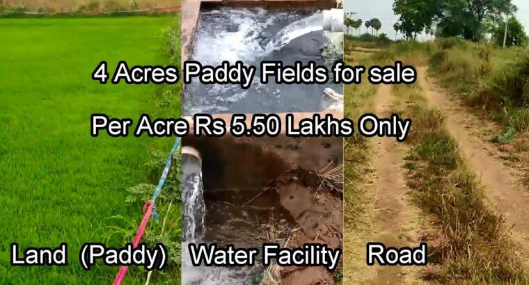 four Acres || Paddy Land For Sale || 5.50 Lakhs || Kondapuram ||  7386888988 || #MadhavTv||