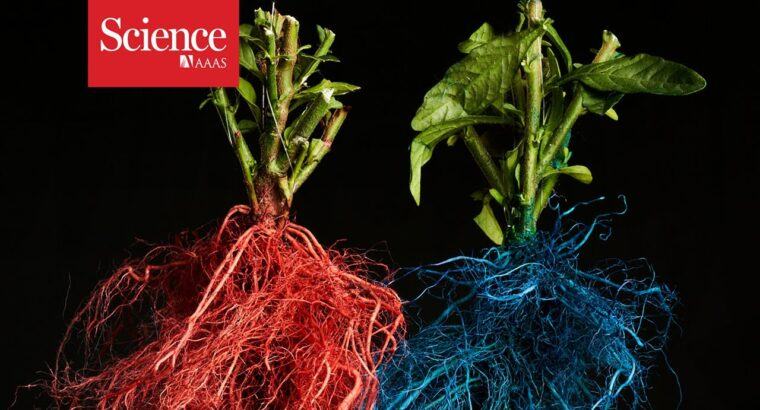 Roots from completely different crops compete for prime actual property underground