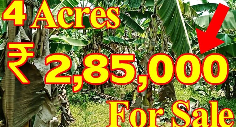 four Acres Banana Farming Land Sale   Vizag Actual Property Television   Water Facility Land   Charge ₹ 2,85,000